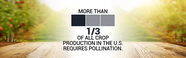 Bees are responsible for more than 1/3 of U.S. Crop Production in the US