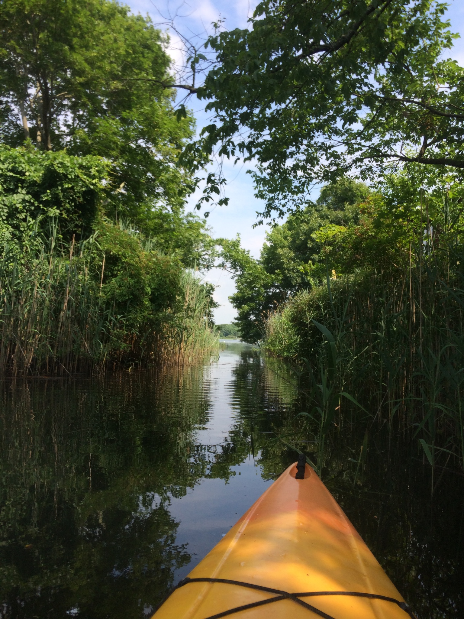 kayak on the water under trees