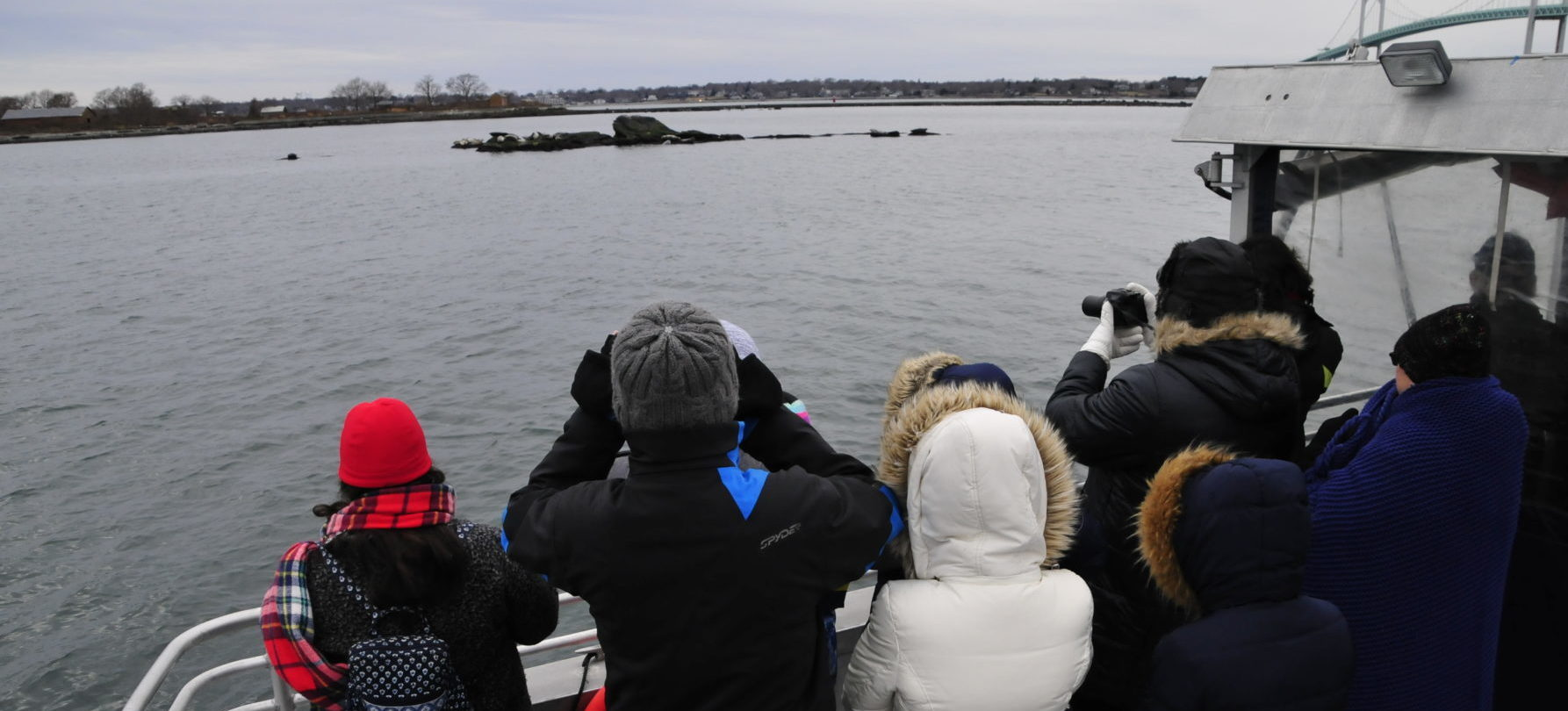 Seals In The Bay Seal Watch Tours Save The Bay Winter Fun I own nothing all rights go to ajr i just wanted a 1 hour version i noticed people are actually watching this so like if y'all want. seals in the bay seal watch tours