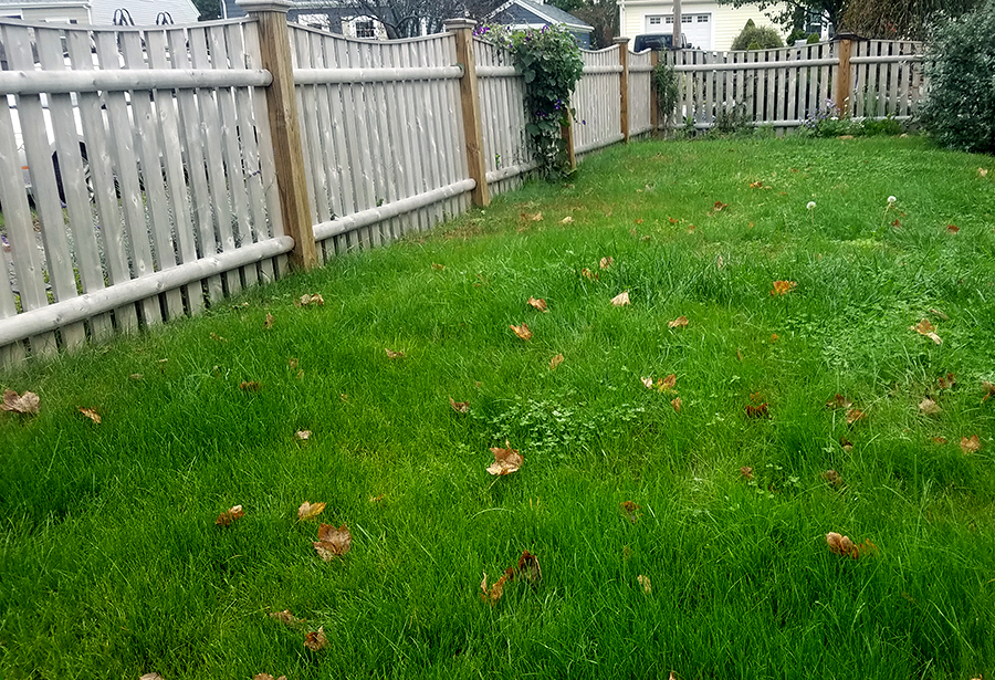 Unwatered and unfertilized Bay-friendly lawns can still be green and lush!