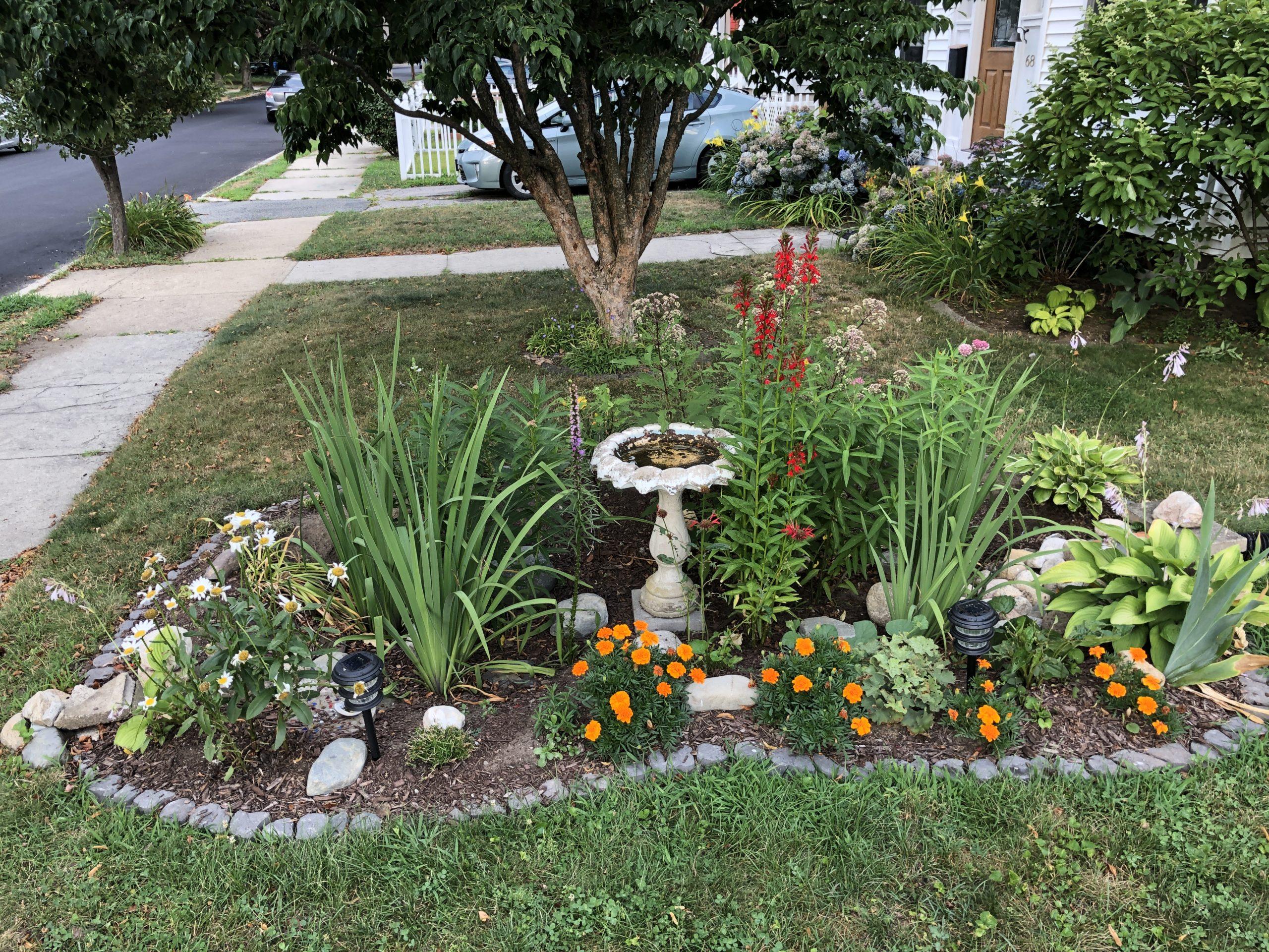 Rain garden in bloom