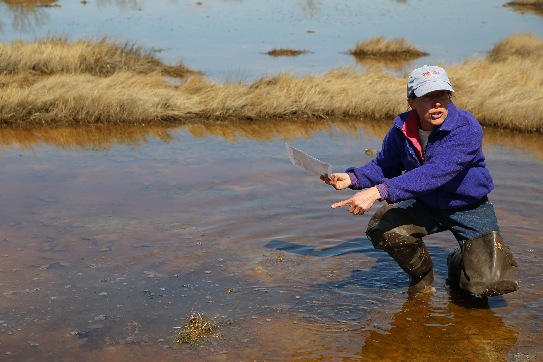 Wenley Ferguson digging runnels at Round Marsh