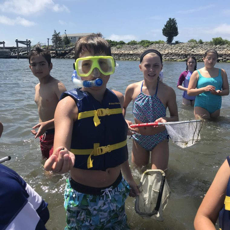 BayCampers explore marine life in Narragansett Bay