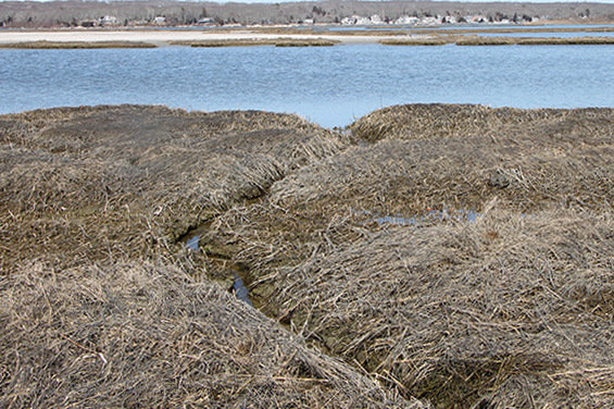 A runnel, or a small creek, weaves its way through a springtime marsh. The runnel sits lower than the brown-gray saltmarsh grasses, and leads out of the marsh toward open water.
