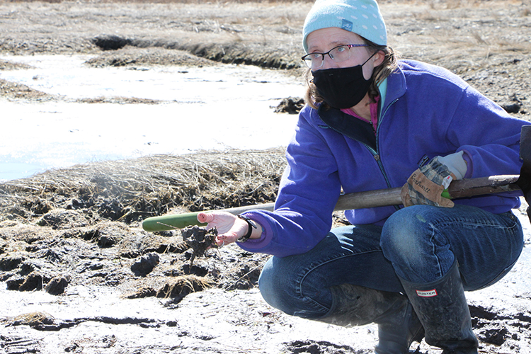 Wenley, Save The Bay's director of habitat restoration, crouches near the muddy sod surface in a saltmarsh. She holds a scoop of mud in one hand, while balancing the handle of shovel on her knee.