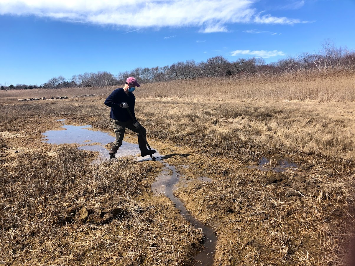Outdoors, a man steps on the lip of a shovel, digging a runnel in the middle of a saltmarsh that is otherwise covered in brown and golden vegetation in April 2021.