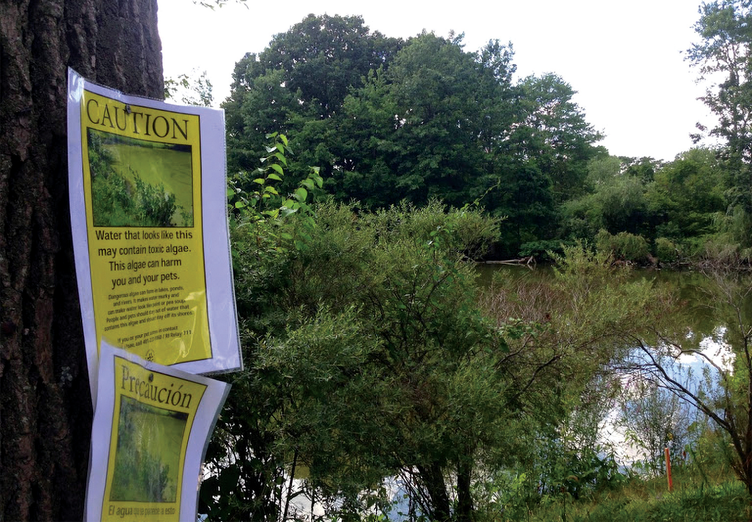 A warning sign next to one of Roger Williams Park ponds cautions visitors of a cyanobacteria bloom.