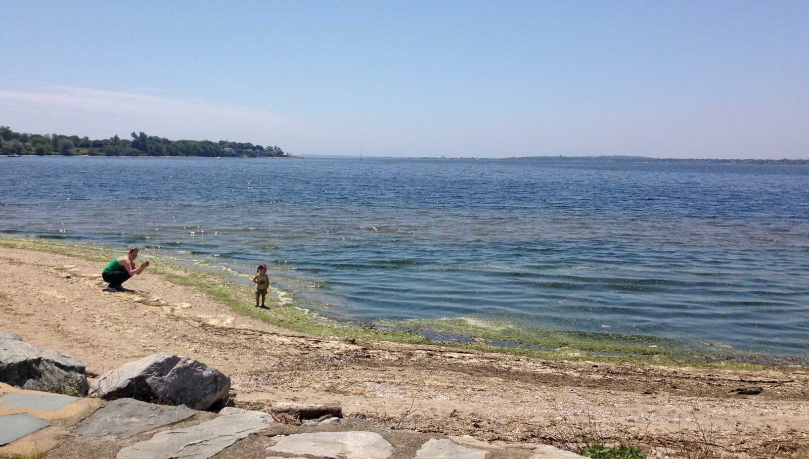 Algae blooms, caused by excessive nutrients in the water, can be seen along the shores at Sabin Point.