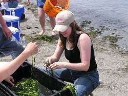 Eel grass restoration